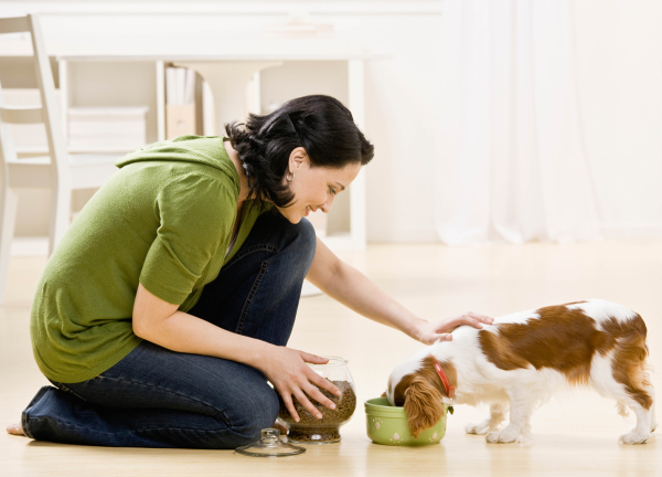 Professional pet sitters resized 600