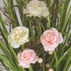 Grass Floral Bundle White & Pink Roses 100cm