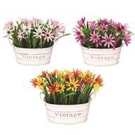 Chrysanthemum Oval Planter 19cm 3 Assorted