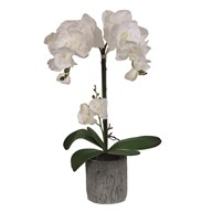 White Orchid in Pot 62cm
