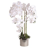 White Orchid In Silver Pot 91cm