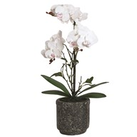 White Orchid in Grey Pot 52cm