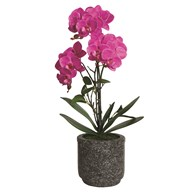 Pink Orchid in Grey Pot 52cm