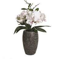 White Orchid in Grey Pot 32cm