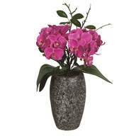 Pink Orchid in Grey Pot 32cm