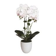 White Orchid in White Pot 54cm