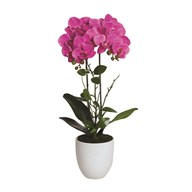 Pink Orchid in White Pot 54cm