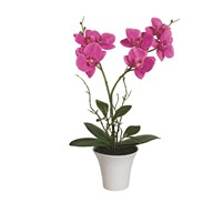 Pink Orchid in White Pot 43cm