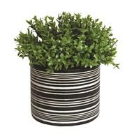 Green Floral Plant in Black Pot 23cm