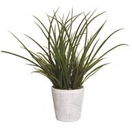 Grass in White Pot 42cm