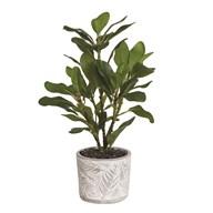 Banyan Tree Pot 41cm