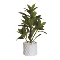 Banyan Tree in White Quilted Ceramic Pot 42cm