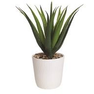Succulent in Ceramic Pot 36cm