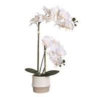 White Orchid in Ceramic Pot 53cm