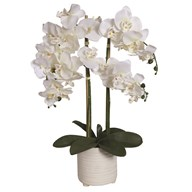 White Orchid in Ceramic Pot 74cm