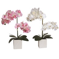 Orchid In Pot 2 Assorted 53cm