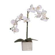 White Orchid in Grey Pot 43cm