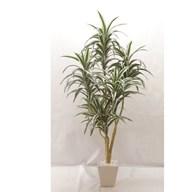 Dracaena Plant in White Pot 122cm