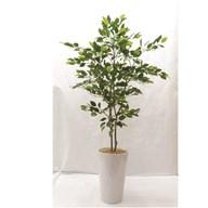 Green Ficus Tree In Pot 111cm