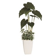 Alocasia Leaf Plant In Pot 61cm
