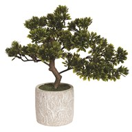 Bonsai Tree In Pot 35cm