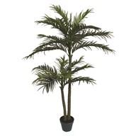 Chrysalidocarpus Tree 134cm