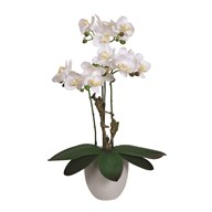 White Orchid in Pot 52cm