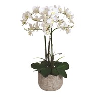 White Orchid in Pot 58cm