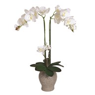 White Orchid in Pot 64cm