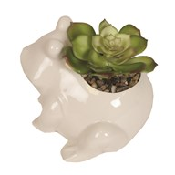 Artificial Succulent in Frog Pot 10cm