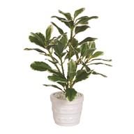 Plant In Ceramic Pot 26cm