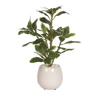 Plant In Ceramic Pot 78cm