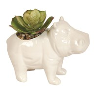Artificial Succulent in Hippo Pot 11.5cm
