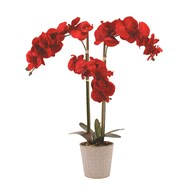Icy Orchid Red 63cm