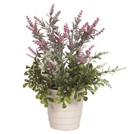 Lavender in White Pot 40cm