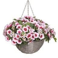 Petunia Hanging Basket White (30*45cm)