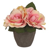 Rose Decorative Pot Peach 20cm