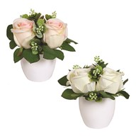 Rose Pot 2 Assorted 17cm