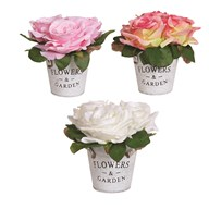 Rose Pot 17cm 3 Assorted