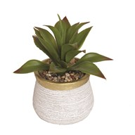 Succulent Decorative Pot 17cm