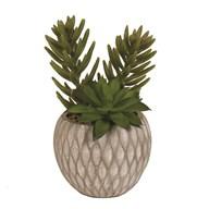 Succulent Decorative Pot 20cm