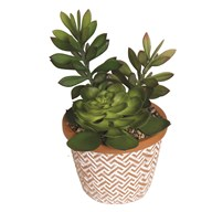Succulent Decorative Pot 21cm