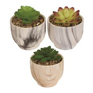 Succulent In Pot 3 Assorted 10.5cm