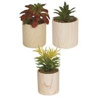 Succulent In Pot 3 Assorted 18cm
