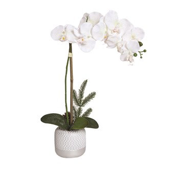 Deco Orchid In Pot 52cm White