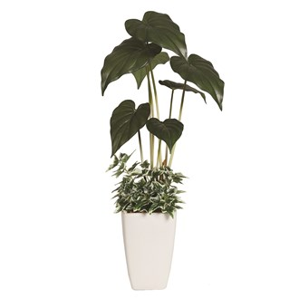 Alocasia Leaf Plant In Pot 61cm