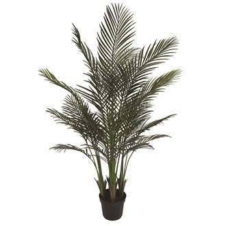 Areca Palm Tree 147cm