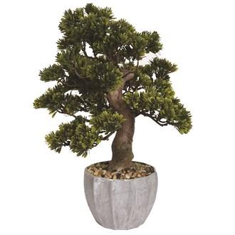 Bonsai Tree In Pot 45cm