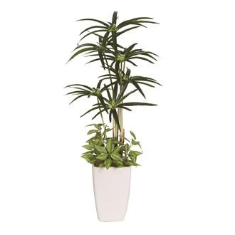Cyprus Leaf Plant In Pot 61cm
