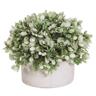 Pale Green Topiary Grey Pot 26x23cm